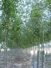 山东肥城汶阳万亩苗木繁育基地