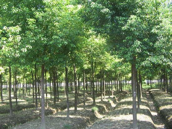 常州市夏溪花木市场
