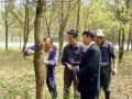 苗木的病虫害防治 (189播放)