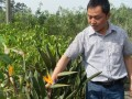 花卉苗木的栽培管理 (377播放)