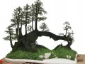 树桩盆景栽培与管理 (204播放)