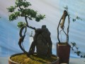 中国盆景艺术 (372播放)