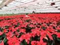 海南儋州:苗木花卉基地落户 带动农户增收 (303播放)