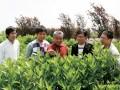 朝阳:让绿化带成为农民的致富带 (629播放)