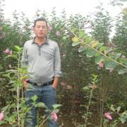 江苏省沭阳县博大绿化苗木基地
