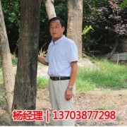扶沟县绿源特色花木种植专业合作社
