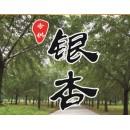 江苏邳州供应3-80公分实生银杏