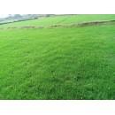 草坪,供应四季青草坪,沙坪果岭草,百慕大与黑麦草混播等