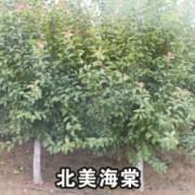 山东省菏泽市新华苗圃