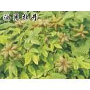山东菏泽供应牡丹种子价格