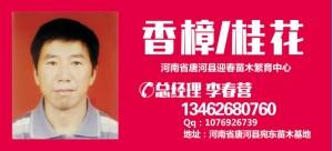 李春营——河南省唐河县迎春苗木繁育中心