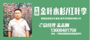 孟志刚——遂平石桥园艺有限公司