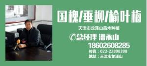 潘永山——天津市龙泽山苗木种植