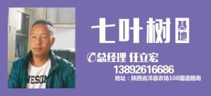 任立宏——陕西省汉中秦秀苗木基地