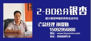 孙提勤——山东郯城鲁南银杏培育中心