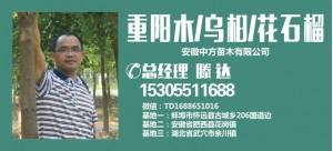 滕达——安徽中方苗木有限公司