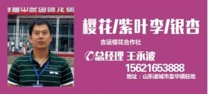 王勇波——山东诸城吉运樱花合作社