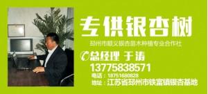 于涛——邳州市顺义银杏苗木种植专业合作社