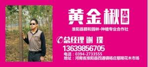 谢璞——淮阳县颖和园林种植专业合作社