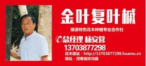 杨安营——扶沟县绿源特色花木种植专业合作社