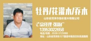 张新广——山东菏泽鲁彩苗木有限公司