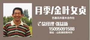 张益新——山东临朐艺鑫花卉苗木合作社