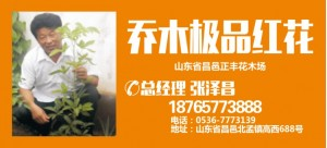 张泽昌——山东省昌邑市正丰花木场