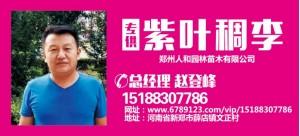 赵登峰——郑州人和园林苗木有限公司