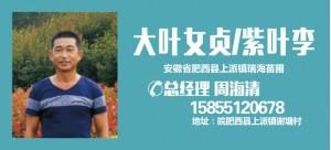 周海清——安徽省肥西县上派镇瑞海苗圃