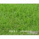 佛甲草、结缕草、白三叶、马尼拉