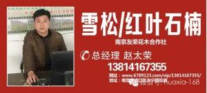 赵太荣——南京友荣花木合作社