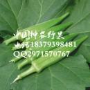 特色蔬菜种植 黄秋葵种子批发