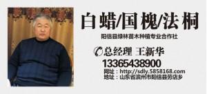 王新华——山东滨州绿园苗木基地