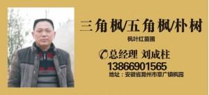 刘成柱——安徽滁州枫叶红苗圃