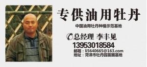 李丰见——中国油用牡丹种植示范基地