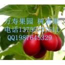 既是水果又是蔬菜的水果树蛋果