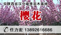 陕西汉中供应樱花、紫薇苗圃基地价格