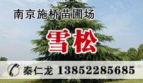 供应雪松、龙柏、广玉兰等