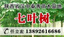 苗木供应七叶树、樱花、紫薇