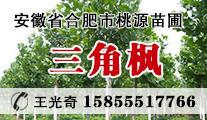 苗木供应三角枫