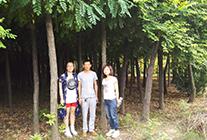2015.7.7华夏园林参观鄢陵县绿州花木合作社
