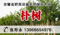 朴树、红叶石楠、桂花、香樟、紫薇