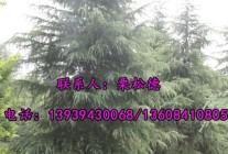 河南省项城市玉斌苗圃场