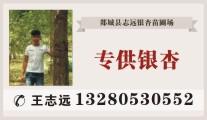 山东省志远银杏苗木销售开发有限公司