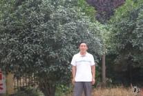 2015.7.19对河南省项城市绿野园林花木场考察