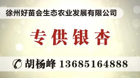 诚信,是他刻在骨子里的信念——访全国诚信苗圃创始人胡杨峰