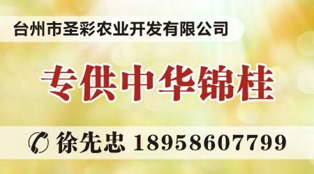 中华锦桂——亩产上百万元背后的秘密