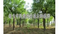 道路景观绿化草坪/草坪规划及养护/苗木种植基地