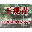 苗木供应栾树——含山县冠青生态林业有限公司