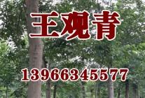 精品苗木展示